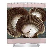Seashells Spectacular No 22 Shower Curtain by Ben and Raisa Gertsberg
