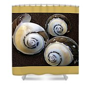 Seashells Spectacular No 23 Shower Curtain by Ben and Raisa Gertsberg
