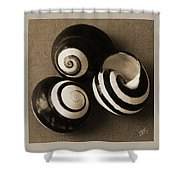Seashells Spectacular No 27 Shower Curtain by Ben and Raisa Gertsberg