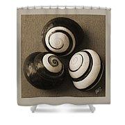 Seashells Spectacular No 28 Shower Curtain by Ben and Raisa Gertsberg