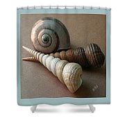 Seashells Spectacular No 29  Shower Curtain by Ben and Raisa Gertsberg