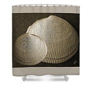 Seashells Spectacular No 8 Shower Curtain by Ben and Raisa Gertsberg