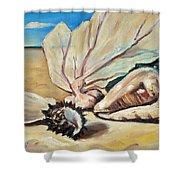 Seashore Shell Still Life Shower Curtain