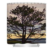 Seaside Pine Shower Curtain