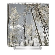 Silver Birch  Shower Curtain
