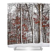 Seasons Converge Shower Curtain