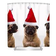 Seasons Greetings Christmas Caroling Pug Dogs Wearing Santa Claus Hats Shower Curtain