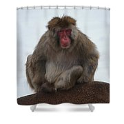 Seated Macaque Snow Monkey Shower Curtain