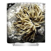 Seaweed Rock Shower Curtain