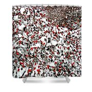 Secluded Winter Haven Shower Curtain