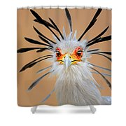 Secretary Bird Portrait Close-up Head Shot Shower Curtain by Johan Swanepoel