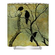 Secretive Crows Shower Curtain