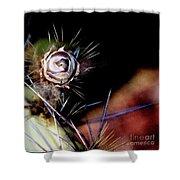 Sedona's Desert Rose Shower Curtain