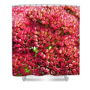 Sedums Upclose Filtered Shower Curtain
