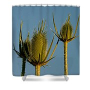 Seed Heads Reach For The Sky Shower Curtain