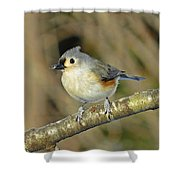 Seed On Tufted Titmouse Shower Curtain