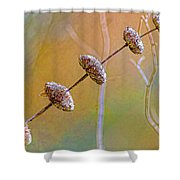 Seed Pod Pagoda Shower Curtain