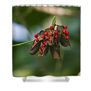 Seeds Of A Tropical Plant India Shower Curtain