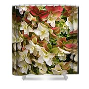 Seeing Double - Hydrangeas Shower Curtain