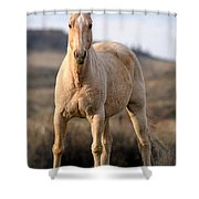 Seeing Eye-to-eye Shower Curtain