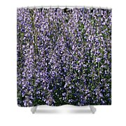 Seeing Lavender Shower Curtain