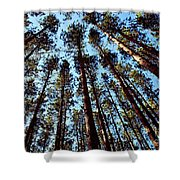 Seeing The Forest Through The Trees Shower Curtain