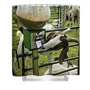 Self Serve Goat Shower Curtain