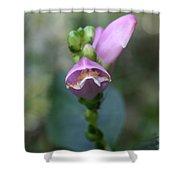 Selfheal Flower Shower Curtain