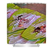 Selling Betel Nut For Chewing In Tachilek-burma Shower Curtain