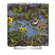 Semi-palmated Plover Pictures 44 Shower Curtain