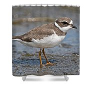 Semi-palmated Plover Pictures 59 Shower Curtain