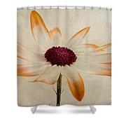 Senetti Pericallis Orange Tip Shower Curtain