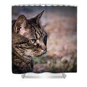 Senior Cat Shower Curtain