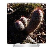 Senor Cacti Shower Curtain