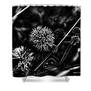 Sensitive Briar Schrankia Nuttalii  Shower Curtain