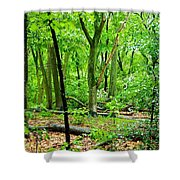 Sensory Saturation Shower Curtain