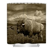 King Of The Herd Shower Curtain