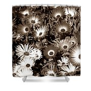 Sepia Asters Shower Curtain