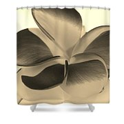 Sepia Bloom Negative Shower Curtain