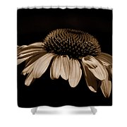 Sepia Daisy Shower Curtain