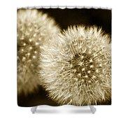 Sepia Dandelions Shower Curtain