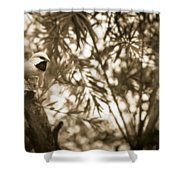 Sepia Finch Shower Curtain