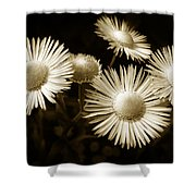 Sepia Flowers Shower Curtain