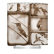 Sepia Hummingbird Collage Shower Curtain