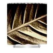 Sepia Leaf Shower Curtain
