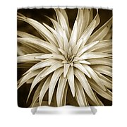 Sepia Plant Spiral Shower Curtain
