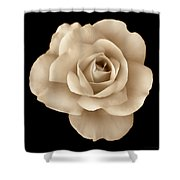 Sepia Rose Flower Portrait Shower Curtain