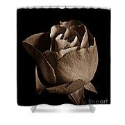Sepia Rose Portrait 2 Shower Curtain