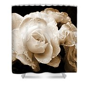 Sepia Roses With Rain Drops Shower Curtain by Jennie Marie Schell
