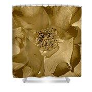 Sepia Toned Rose Close Up Shower Curtain